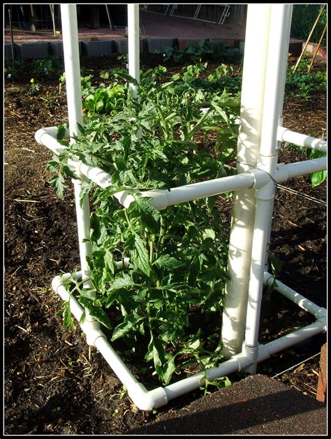 build tomato cage how to build your own pvc tomato cage ignorance is bliss