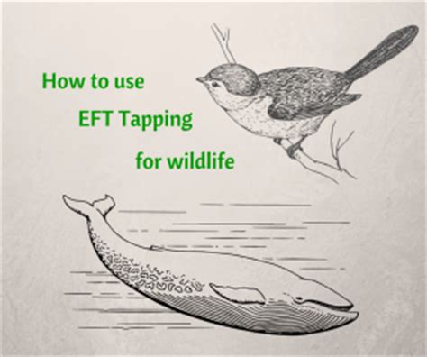 top 28 how to stop a bird from tapping on window