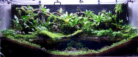 land and water aquarium paludarium wikiwand