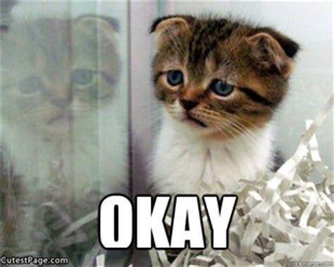 Sad Cat Meme - you make me sad meme quotes