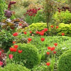 Shop Mein Schoener Garten De : flockenblume pflanzen pflege und tipps mein sch ner garten ~ Orissabook.com Haus und Dekorationen