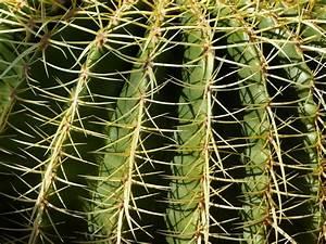 Cactus Sans Epine : images gratuites la nature cactus d sert pine vert ~ Melissatoandfro.com Idées de Décoration