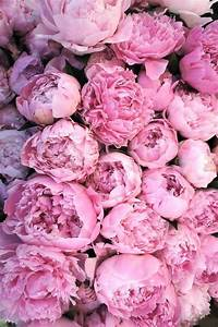 Peonies wallpaper iPhone 6