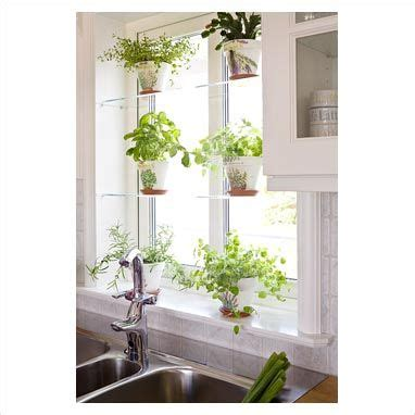 Growing Herbs In Kitchen Window by Kitchen Window Garden Ideas Information