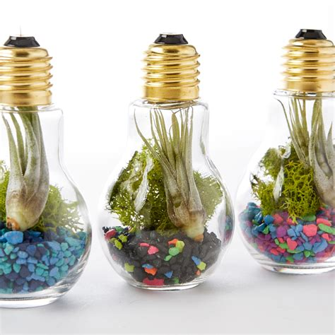 Homemade Living Room Furniture by Diy Light Bulb Terrarium Adorable Home