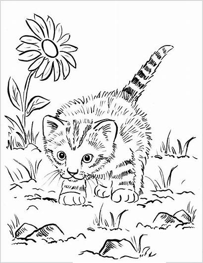 Coloring Cat Outside Chat Chaton Playing Colorear