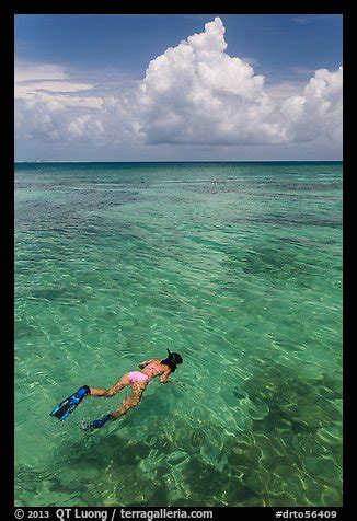 picturephoto woman snorkeling dry tortugas national park
