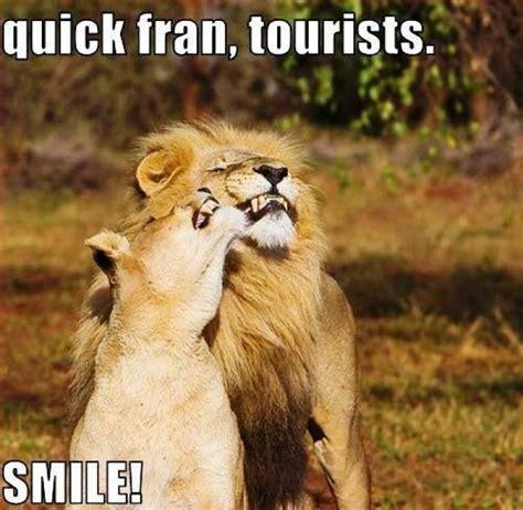 Lions Memes - image gallery lion meme