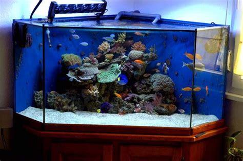 aquarium eau de mer 50 litres