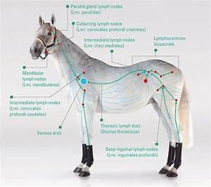 391 Best Holistic Horses Images On Pinterest