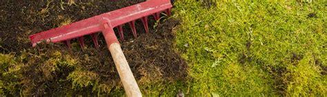 moos entfernen cola moos entfernen hausmittel moos entfernen auf terrasse co anleitung hausmittel hausmittel gegen