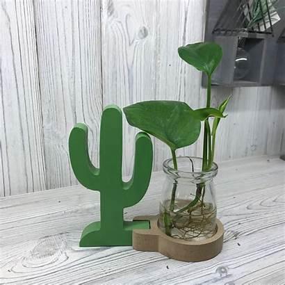 Hydroponic Cactus Pot Dropship Pots Plants Hydroponics