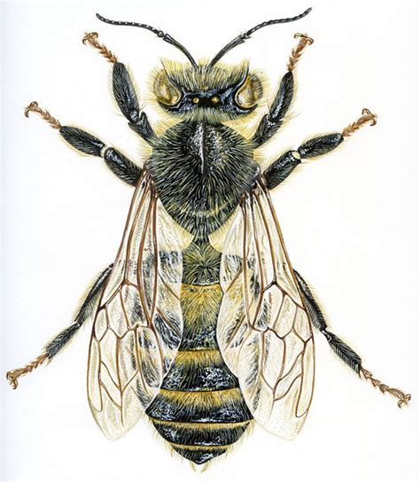 jean louis verdier ouvri 232 re abeille par jean louis verdier pyrography