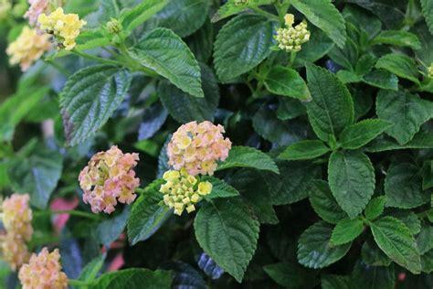 Garten Pflanzen Pralle Sonne by Pflanzen F 252 R Die Pralle Sonne Diese Balkon Und