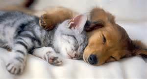 cat puppy puppies vs kittens images puppies and kittens wallpaper