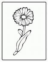 Flower Coloring Spring Flowers Daisy Flores Desenho Dibujos Blume Pintar Jonas Brothers Printable Genial Ausmalbilder Colorear Library Clipart Siete Colores sketch template