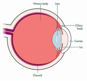 Ocular Melanoma  Melanoma Of The Eye