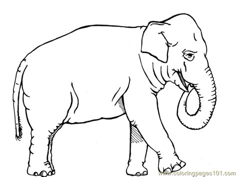 african elephant coloring page  elephant coloring