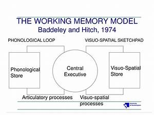 Ppt, -, The, Working, Memory, Model, Baddeley, And, Hitch, 1974, Powerpoint, Presentation