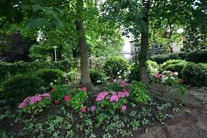 Hortensien Kombinieren Mit Anderen Pflanzen : pflanzen unter b umen galanet blog ~ Eleganceandgraceweddings.com Haus und Dekorationen