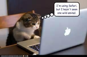 cat jokes cat humor where the things aren t