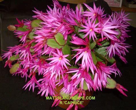 plantes d int 233 rieur faciles d entretien