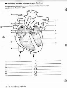 Labeling Parts Of The Heart Unique Free Unlabelled Diagram