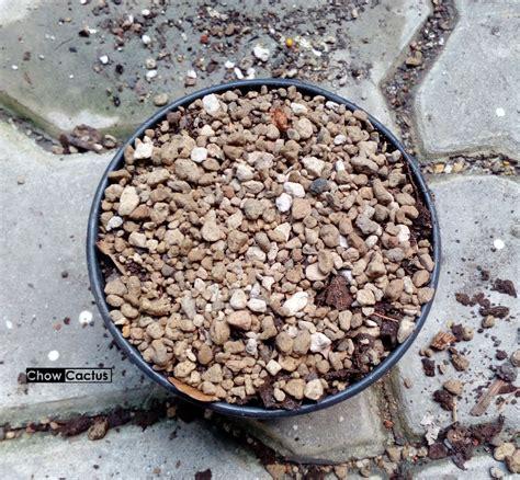 การเพาะเมล็ดมะพร้าวทะเลทราย ( Dorstenia foetida ) | Chow ...