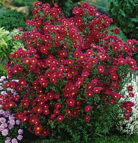 to fall blooming perennials fall blooming perennials