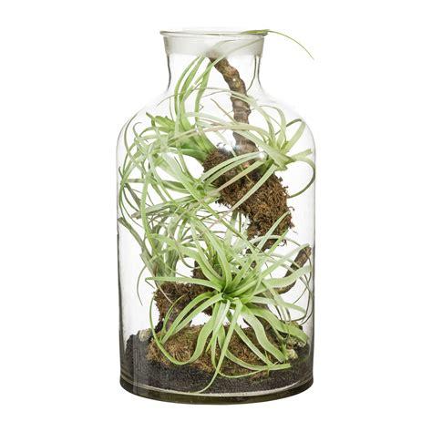 tillandsien im glas tillandsien arrangement im viereckigen glas kaufen bei obi tillandsien