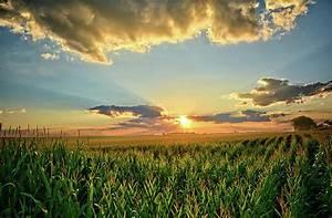 Iowa, Corn, Fields, Photograph, By, Bonfire, Photography