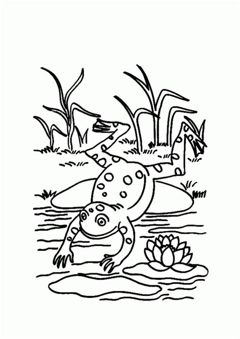 coloring pages   frog   pond coloring home