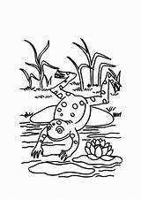 Frog Pond Coloring Pages Lily Pad Jump Frogs Water Sit Colorluna Printable Print Popular Don Cute Theme sketch template