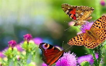 Butterflies Wallpapers Flowers Butterfly Garden Colorful Mariposas