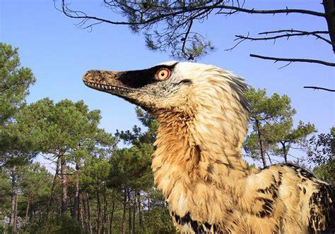 Learn 10 Velociraptor Facts