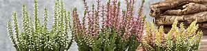 Herbstblumen Für Kübel : herbstblumen f r einen farbenfrohen herbst dehner ~ Buech-reservation.com Haus und Dekorationen