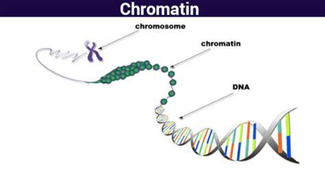 Diagram Of Chromatin by Chromatin Structure Function Analyzing Chromatin