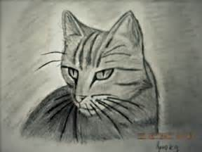 Realistic Cat Drawings