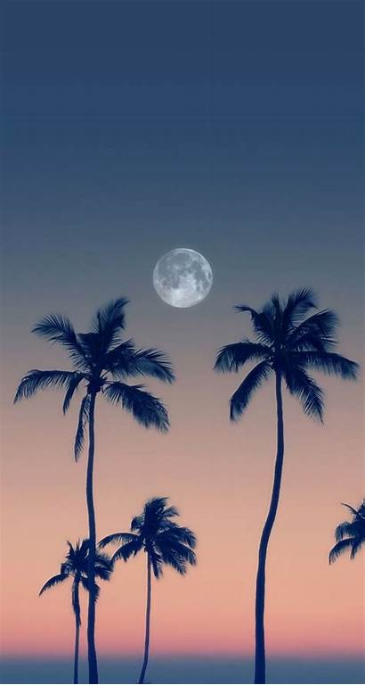 Moon Backgrounds Phone Tree Background Wallpapers Palm