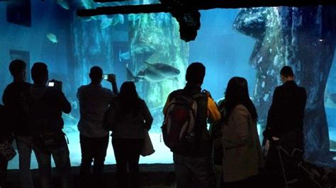 sea aquarium vouchers 2 for 1 vouchers for top visitor attractions topdogdays