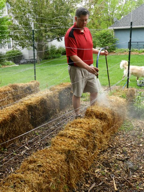 hay bale gardening how to build a straw bale garden modern farmer
