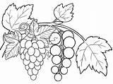 Coloring Pages Fruits Grapes Fruit Grape Copy Preschool Six Children Fun sketch template