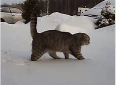So lustig Diese Tiere sehen Schnee zum ersten Mal