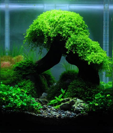 nano aquascape  george  gambario aquarium fish
