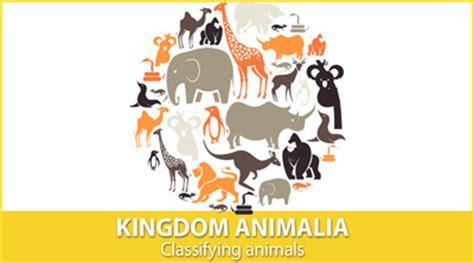 animal kingdom preschoolers classifying animals mensa for 51683