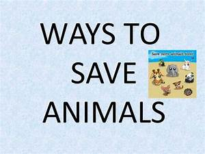 Save animals 2