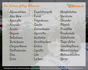 Amaryllis Giftig Für Katzen : best 25 giftige pflanzen ideas on pinterest heilkr uter lexikon kaninchenfutter and ~ Frokenaadalensverden.com Haus und Dekorationen