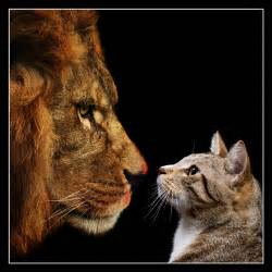 cat vs by fotomathijs on deviantart
