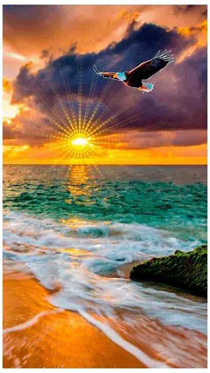 Sunset Beach Ocean Butterflies Morning Nature Catalina