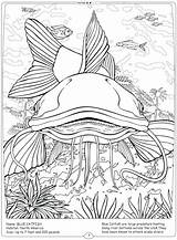 River Coloring Mississippi Catfish Pages Habitat Getcolorings Getdrawings Ocean Printable sketch template